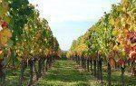 Investir dans le vin - small